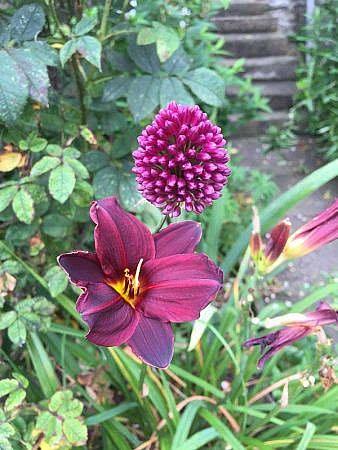 flowers in Yorkshire garden