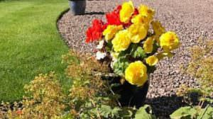 Emergency Colour Flowers